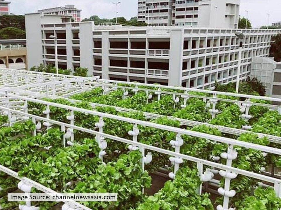 Cover Image for 【Climate Innovation Stories】Singapore's Initiative on Food Resilience (II): Edible Car Parks